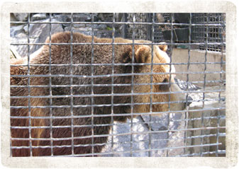 Grizzly - Pocatello Zoo